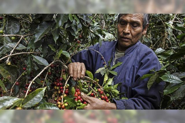 Kleinbauern in der Ferne unterstützen