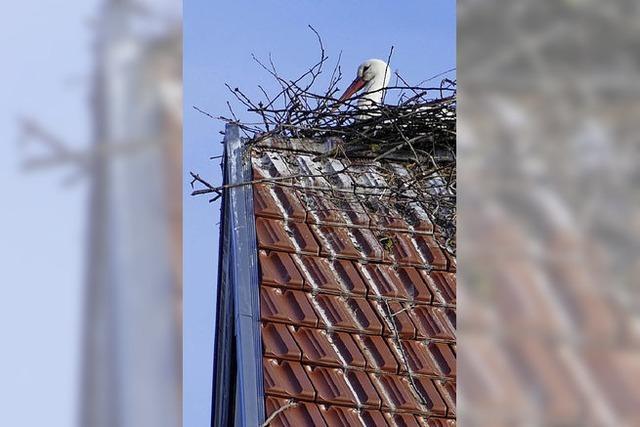 Nest auf Hamba-Areal abgebaut