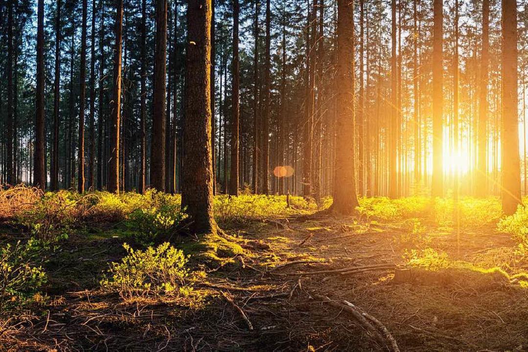 Der Wald strahlt auf uns Menschen eine...ch an die bestehenden Gesetze halten.   | Foto: rcfotostock (adobe.com)