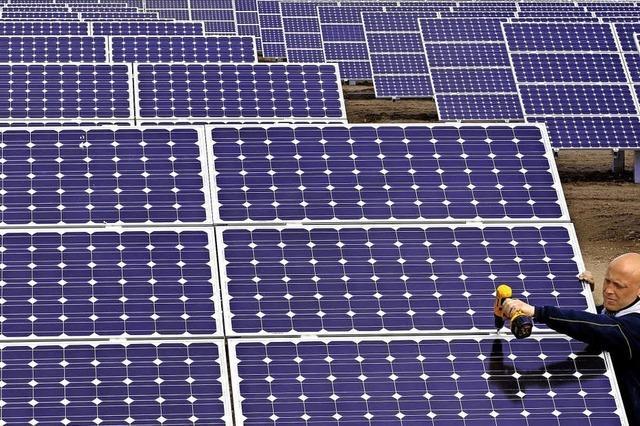 Solarfeld entsteht auf Waldfläche