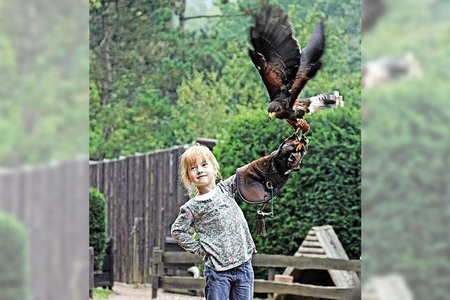 Im Vogelpark Steinen fliegen wieder die Adler