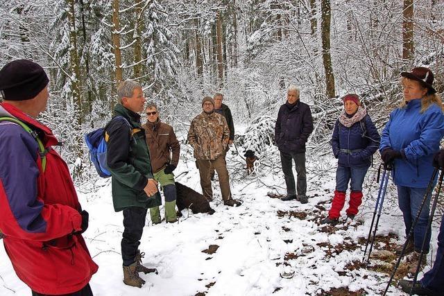 Neue Einblicke in die Waldwirtschaft