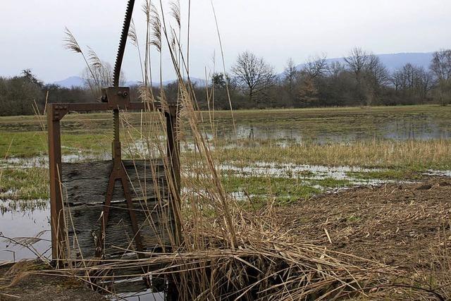 Überfluten für das Ökokonto