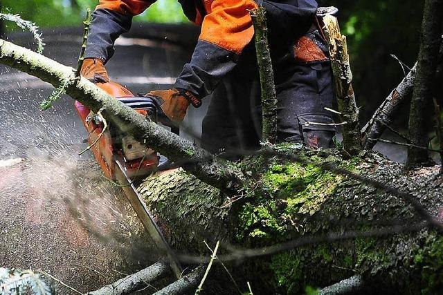 Warum ist Waldarbeit so gefährlich?