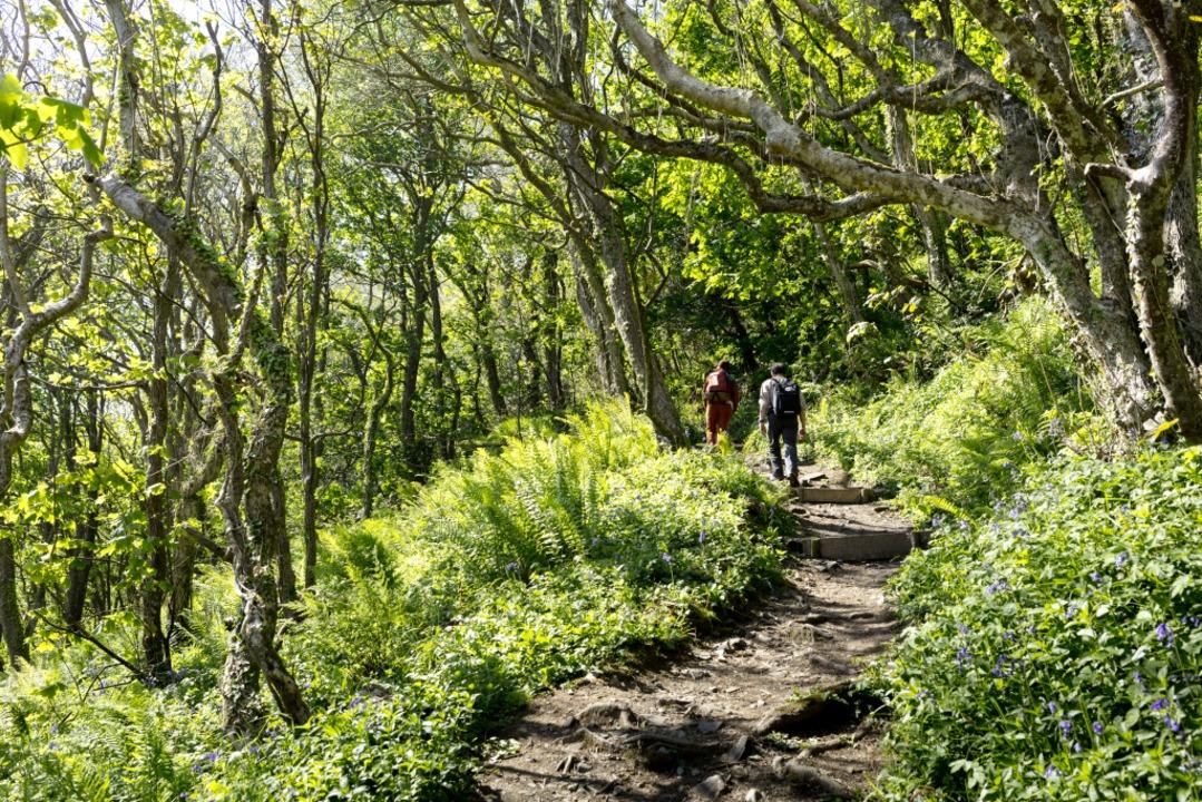 Urlaub auch für die Augen: Wandern im grünen Wald  | Foto: ? Markus Kirchgessner