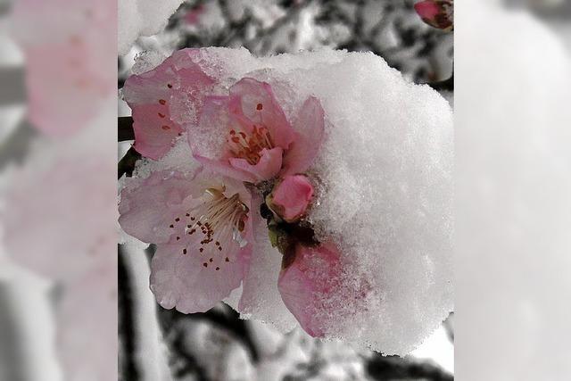 Der Frühling hat sich durchgesetzt – endlich!