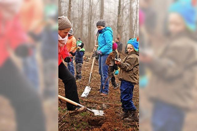1000 neue Bäume für den Vörstetter Wald