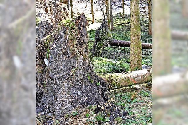 Beschränkter Holzeinschlag