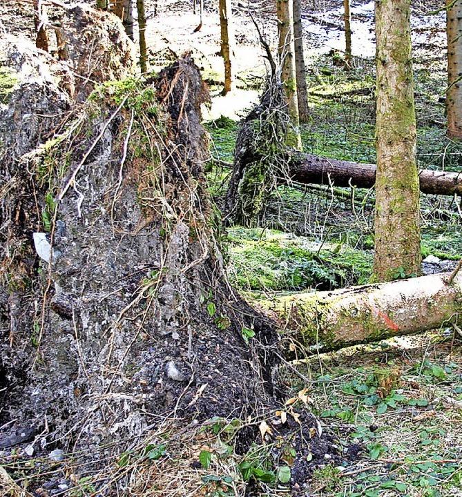 Schneebruch- und Sturmschäden haben Folgen für Gersbachs Waldbesitzer.     Foto: Sutter