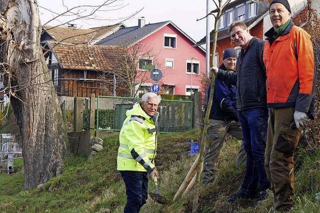 Neue Kastanie in Wallbach