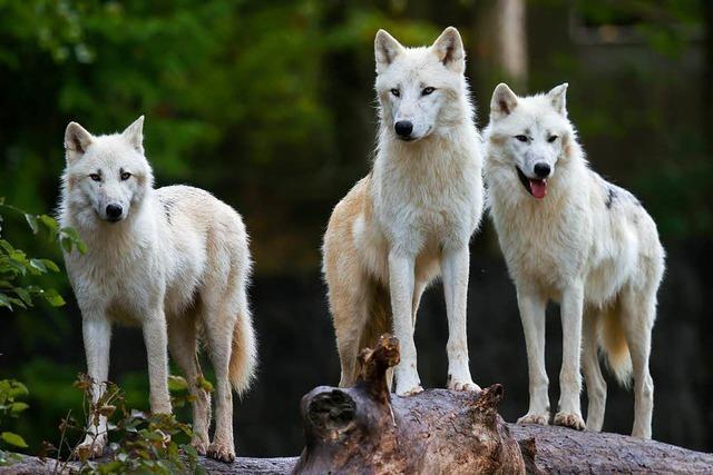 Parc Animalier in Rhodes: Einfach tierisch