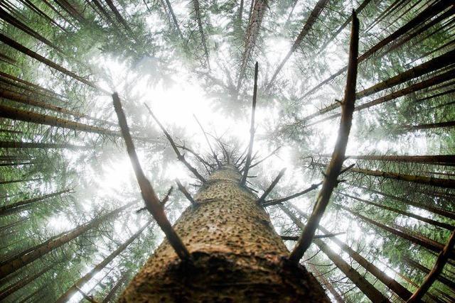 Wie viel Nachhaltigkeit darf es sein?