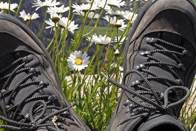 Wandern mit der BZ und dem Schwarzwaldverein