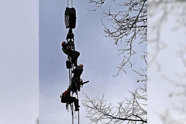 Stämme und Baumkletterer am Haken
