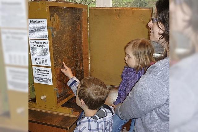 Museum für Bienenkunde wird 40