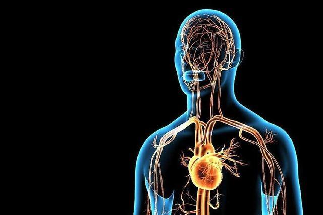 Sind Arterien verstopft, kann sich der Körper selbst Umleitungen bauen