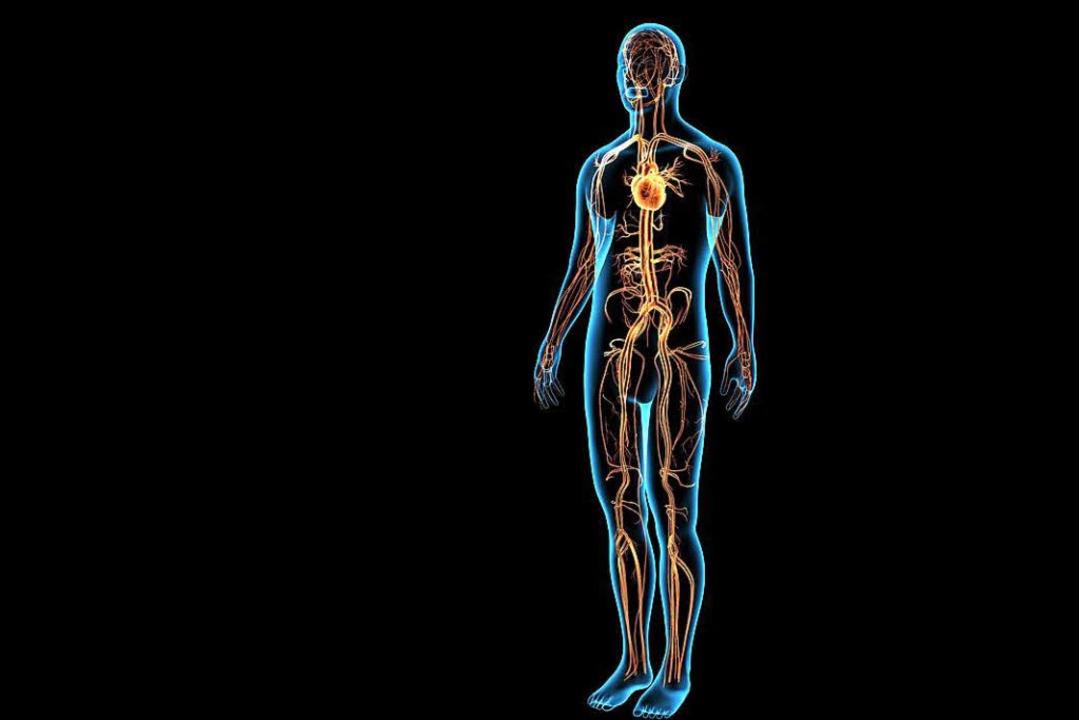 Sind Arterien verstopft, kann sich der Körper selbst Umleitungen ...