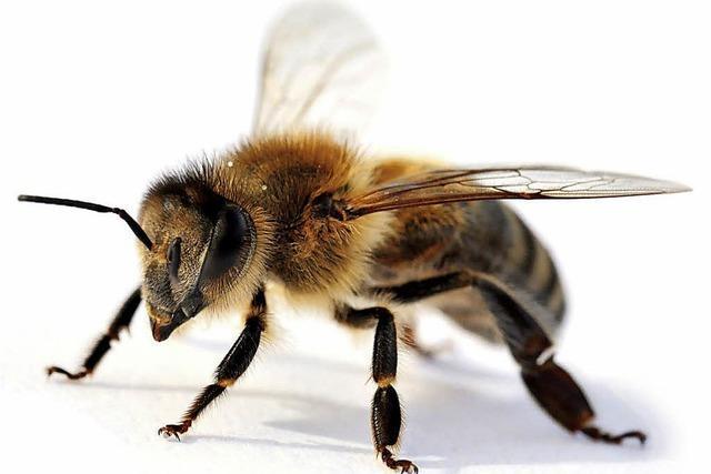 Einzigartiges Forum für die Honigbiene