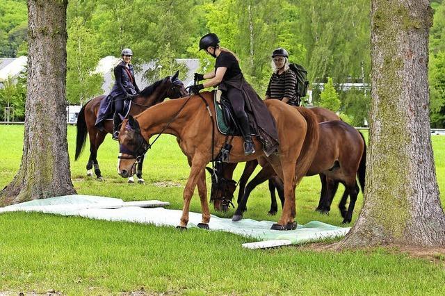 Sehr aktiv mit den Pferden