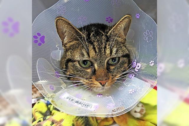 Immer wieder kommen Katzen in Not