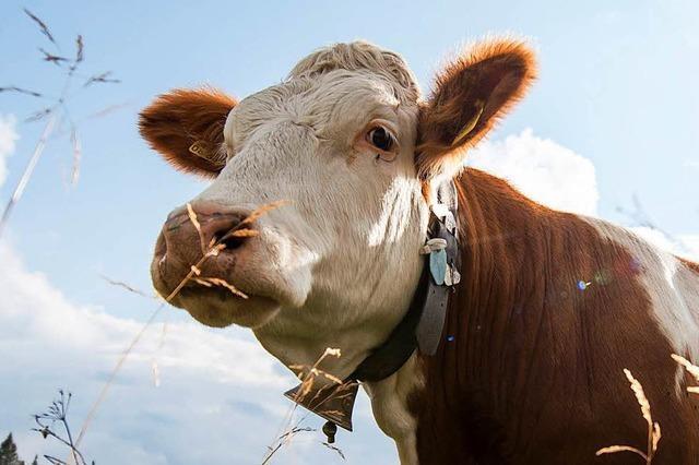 Unternehmen kennzeichnen ihr Fleisch mit Tierwohllabels – und kommen dem Staat zuvor