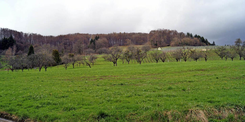 Am nördlichen Ausgang von Feuerbach  s...as Baugebiet Mittelberg-Tal entstehen.  | Foto: Hartenstein