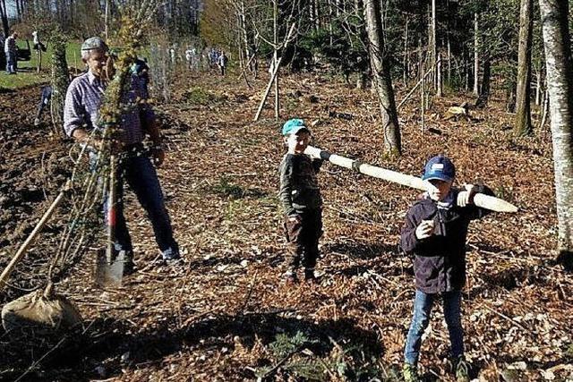 Viele Freiwillige helfen dem Wald