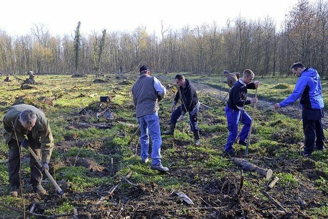 2500 neue Bäume gesetzt