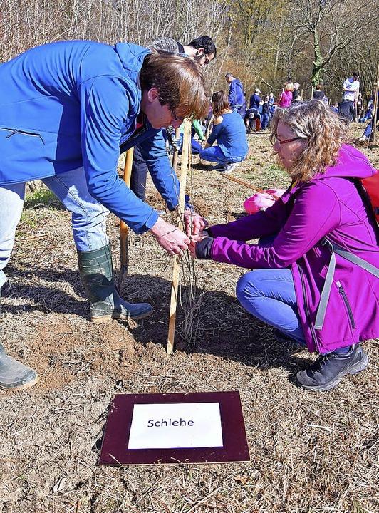 Heimische Bäume und Sträucher wurden von SWE-Kunden gepflanzt.    Foto: Dieter Erggelet