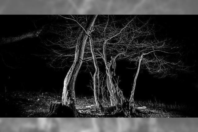 Bäume vom Blitz getroffen