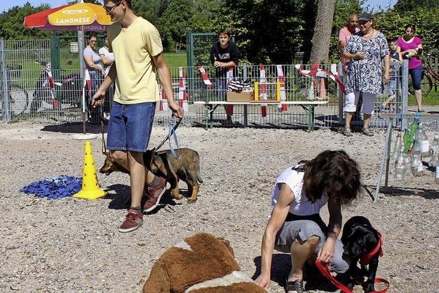 Hundesportler haben ein Führungsproblem