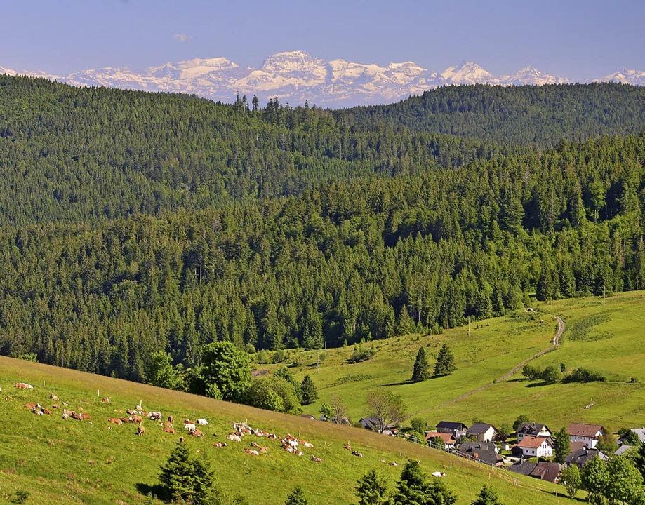 So könnte der Ausblick von der geplant...stischen Angebotes in Bernau schaffen.  | Foto: Manfred Schön