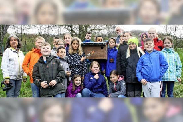 Ein Zuhause für den Wiedehopf in Weil am Rhein