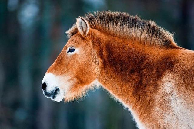 Die Geschichte vom Zusammenleben zwischen Mensch und Pferd muss neu geschrieben werden