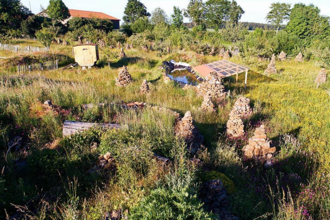 Auch wenn's chaotisch aussieht: Im Naturgarten hat alles seine Ordnung.  | Foto: Martin Egbert