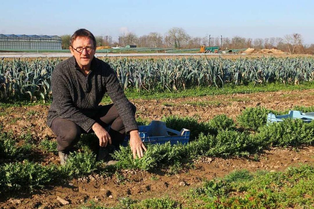 Horst Ritter zeigt, wo auf den Anbaufl...salat steht und wie er geerntet wird.   | Foto: Michael Behrendt