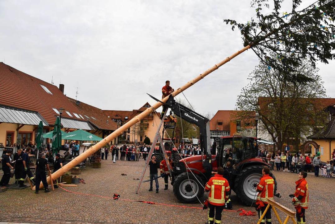Die Feuerwehr macht sich ans Aufrichten der Bürgermeistertanne.  | Foto: e