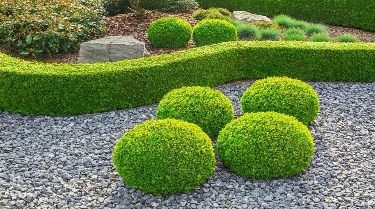 Erholung fürs Auge: Büsche in einem Ziergarten   | Foto: adobe.com