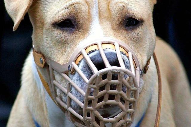 Warum sind manche Hunde gefährlich?