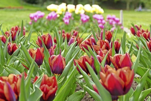 Der Frühling erblüht nun in voller Pracht