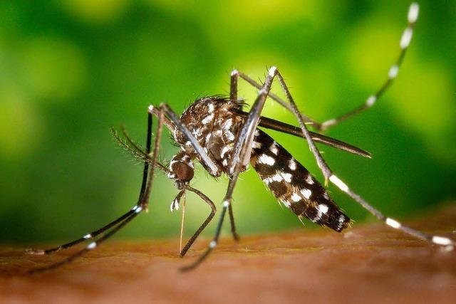Finanzierung der Tigermücken-Bekämpfung verlängert