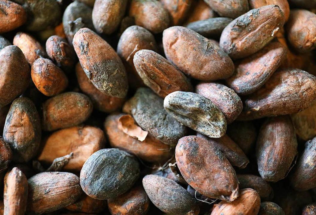 Etwa 4,7 Millionen Tonnen Kakaobohnen werden jedes Jahr weltweit geerntet.    Foto: dpa
