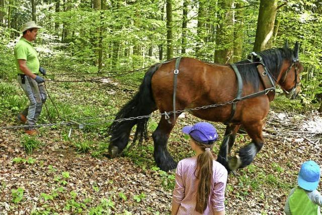 Waldkirch erobert seinen Forst
