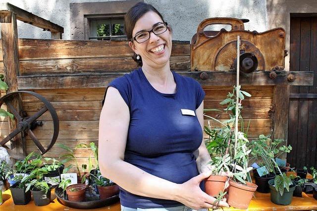Paradies für Pflanzenfreunde