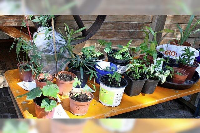 Pflanzentauschbörse