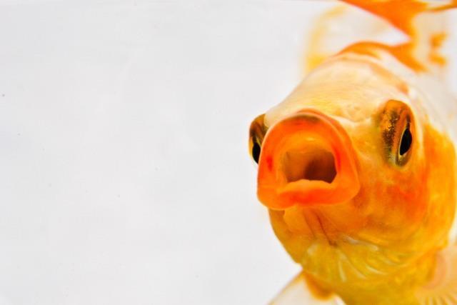 Verfahren um lebendig verschluckten Fisch in Lörrach eingestellt
