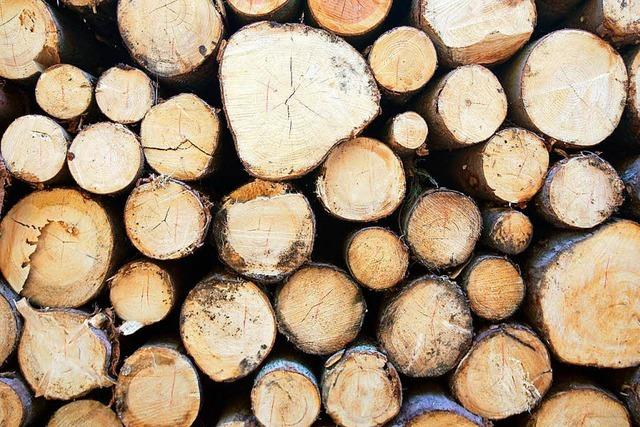 Holz: Der Baustoff, der gleich nebenan im Wald steht