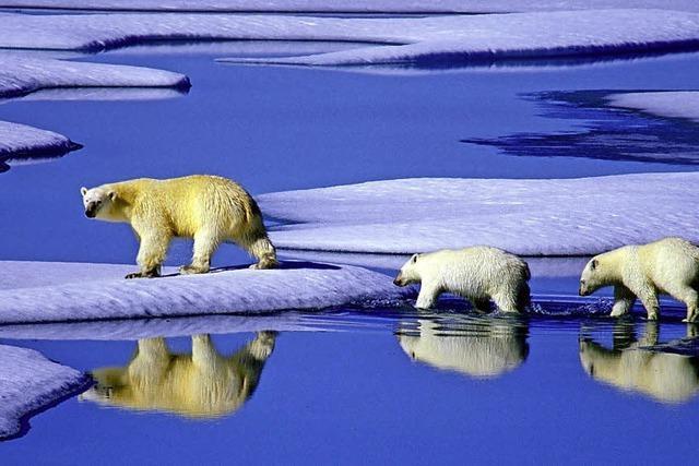 Der Klimawandel findet nicht nur in der Arktis statt