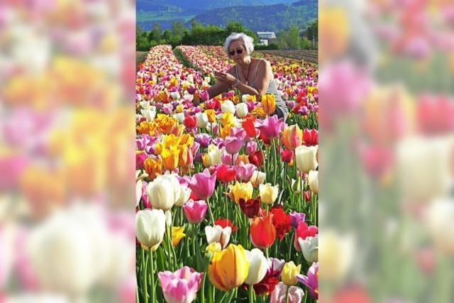 Wo die Tulpen blühen