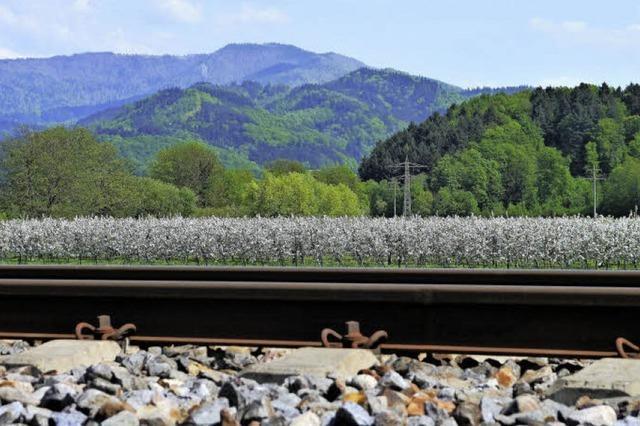 Bäume, die aus Gleisen wachsen